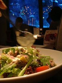 冬野菜と国産豚のツナ見立てサラダ 温かいチーズのソース.jpg