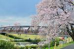 三川公園さくら橋.jpg