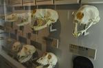 哺乳類頭骨 ジャンボブック 生命の星地球博物館.jpg