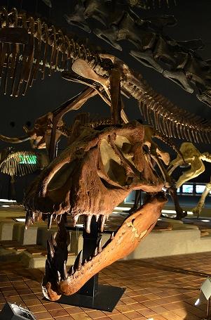 恐竜の時代 生命を考える 生命の星地球博物館.jpg