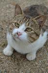 服部牧場のブログ猫 にゃん助さん .jpg