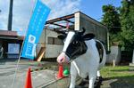 第2会場 神奈川県家畜集合センター 牛のオブジェ.jpg