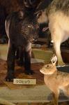黒ヒョウとウサギ 生命の星地球博物館.jpg