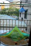 9月 狩野哲郎 自然の設計 黄金町バザール2011.jpg