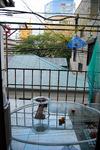 8月 狩野哲郎 自然の設計 黄金町バザール2011.jpg